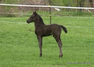 Moriesian Filly Izzy