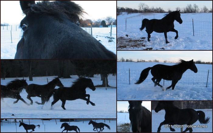 Moriesian in Snow