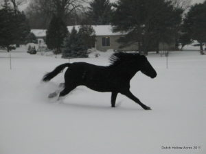 Moriesian Running In Snow