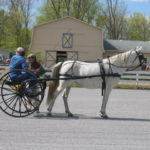 Arabian Horse Cart Cones Clinic