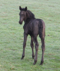 2011 Moriesian Filly